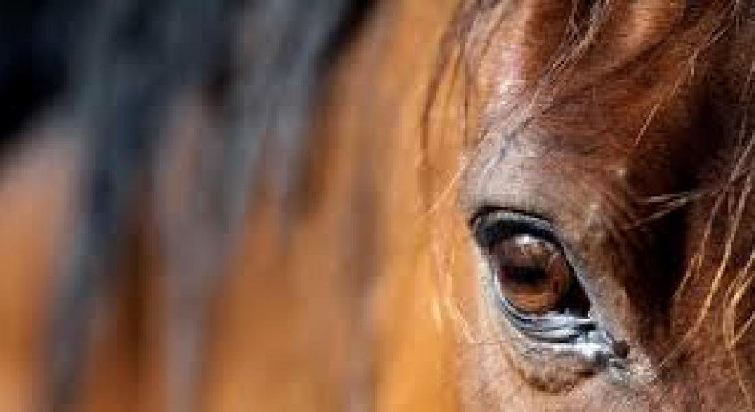 paardencoachdag 3